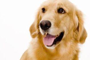 Načelnik Bibinja spašavao je ozlijeđenog psa na magistrali