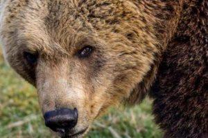Pas, medvjed i srušeno stablo ometaju promet na cestama...