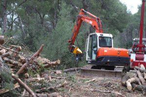 'Sijeku i zdrava stabla, a ista tvrtka bavi se otkupom drva...'
