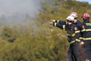Palio korov pa zapalio skoro 40 hektara zemlje pokraj Poreča