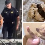 Uhvatila je kamera: Žena bacila vreću punu štenaca u kontejner