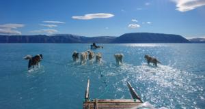 Potresna fotografija pasa koji vuku sanjke po vodi na Grenlandu