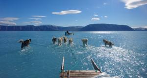 Alarmantna fotka s Grenlanda: Psi su vukli saonice kroz vodu