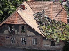 Tajni vrt u Zagrebu raste sam: Krov krasi mnoštvo čuvarkuća