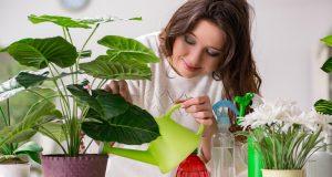 Trikovi kako da cvijeće izdrži bez vode dok ste na godišnjem