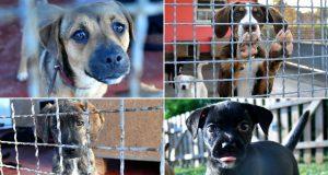 FOTO: TUŽNI POGLEDI IZA REŠETAKA KOJI PARAJU SRCE U zagrebačkom Skloništu za nezbrinute životinje ne pamte kada su bili pod ovolikim pritiskom