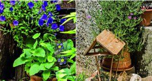 Kako zaštititi biljke dok ste na godišnjem odmoru?