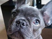 Pas uginuo 15 minuta nakon što je njegov vlasnik izgubio bitku s rakom!