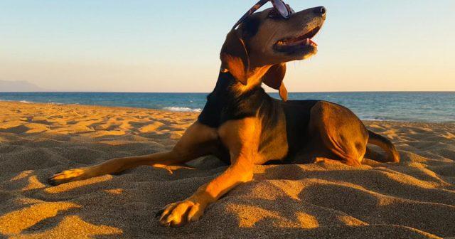 Zaposlite psa: Traži se 'njuška' koja će ocjenjivati skupe hotele