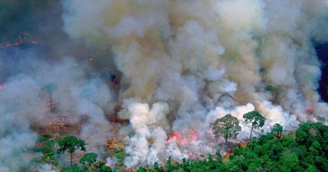 Amazona gori: Zašto je to i naš problem?