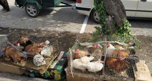 Prijatelji životinja: Na tržnicama se odvija ilegalna trgovina i mučenje životinja!