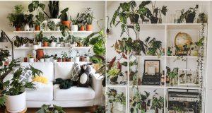 ZELENILO KAO DEKORACIJA Najljepše police s biljkama koje će vas šarmirati