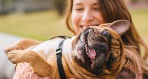 Evo zašto maženje i interakcija s tuđim psom nije uvijek najbolji potez
