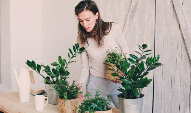 I sobne biljke treba pripremiti za jesen. Donosimo vam savjete kako to napraviti