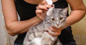 Bolesti ušiju kod pasa i mačaka: Kako ih prepoznati i liječiti?