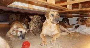 Žena u kući s 97 pasa preživjela uragan Dorian