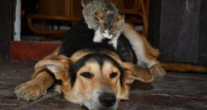 Dok Tom mirno spava, maleni Jerry mu se penje po glavi
