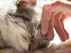 Urnebesan video: Život s mačkom vs. život bez mačke