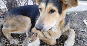 Nerazdvojni par: pas i mačić sada su zajedno u skloništu