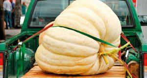 Dobrodošli u listopad, mjesec tikvi omiljene povrtnice iz jesenskog vrta