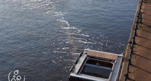 Novi izum: Mjehurići 'love' plastiku i sprečavaju njezin put do oceana