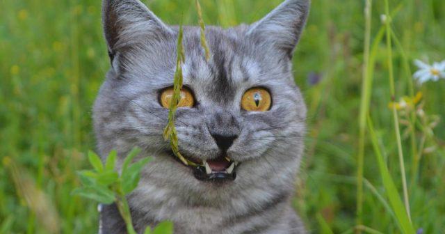 Htio prokrijumčariti preteškog mačka u kabinu zrakoplova
