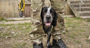Ljubav vojnika i psa: Pronašli su jedan drugog u Afganistanu