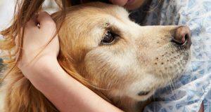 Obratite pažnju na 12 znakova tumora kod pasa