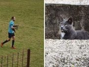 Upornu mačku nekoliko puta nosili van s travnjaka u Orebiću