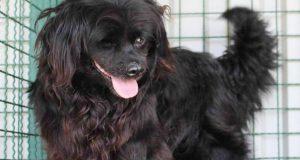 Traži se pomoć potražnog psa: Izgubio se pas kod Borongaja