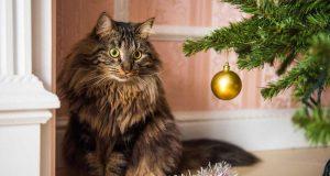 Kako zaštititi božićno drvce od mačke?