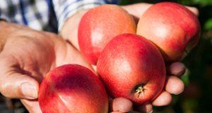 'ČINI SE DA JE STARA IZREKA BLIZU ISTINE' Dvije jabuke na dan bitno poboljšavaju zdravlje