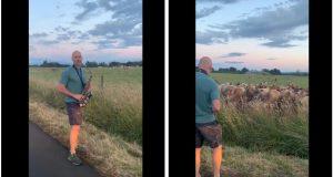 Muškarac zasvirao saksofon kravama, pogledaj njihovu reakciju