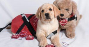 Ako zabranite ulaz terapijskom psu, kazna je do 20.000 kuna!