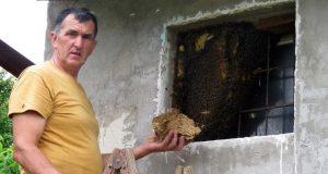'U košnice već nose cvjetni prah, imat ćemo puno meda'