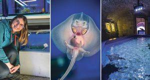 NEMA SLOBODE ZA SREĆKA, BEBU S NAJSLAĐIM OSMIJEHOM U ŽIVOTINJSKOM SVIJETU Država nema potrebne dozvole pa pet ražica čeka selidba u drugi akvarij