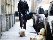 Koronavirus: Ideja za aktivnu izolaciju: Lov na plišane medvjediće po ulici