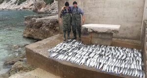 Pelješac: Ribar ulovio 680 kilograma ribe i sve podijelio