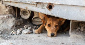 Pogledaj kako pomoći napuštenim životinjama za vrijeme koronavirusa i nakon potresa