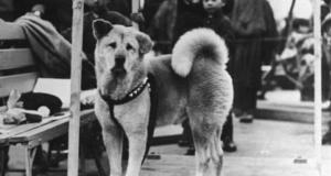 Hachiko: 85 godina od smrti najvjernijeg psa na svijetu