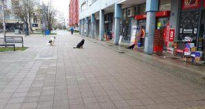 Psi iz Španskoga također slušaju ministra Beroša: 'Ministar je Dr. Dolittle!'
