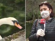 Ekskluzivni intervju s labudom! Da, poludjeli smo i mi, novinari