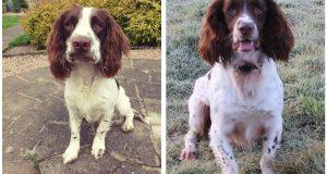 Policijski pas na specijalnom zadatku zbog korona virusa: Pogodi što traži?