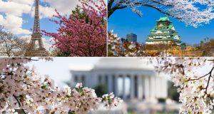 Iz svog kauča pogledajte kako cvjetaju trešnje svuda u svijetu