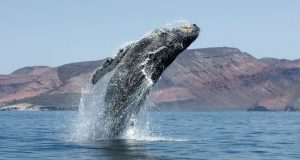 ČOVJEČANSTVU SE PRUŽA PRILIKA DA ISPRAVI GRIJEHE PROŠLOSTI 'Renesansa je na pomolu, možemo unucima ostaviti zdrave oceane'