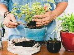 Talog kave tjera puževe i mrave iz vrta i uklanja miris češnjaka s ruku