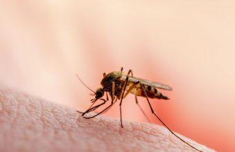 Mogu li komarci prenositi koronavirus?