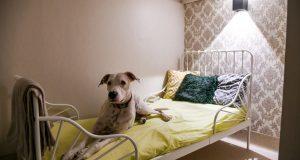 Paspalace: U Zagrebu otvoren hotel za pse