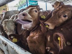 Transport živih životinja povećava mogućnost zaraze uključujući i Covid-19