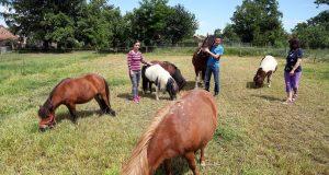 Carstvo u Murskom Središću: 'Na našem ranču Ponyland žive najsretniji konjići na svijetu'